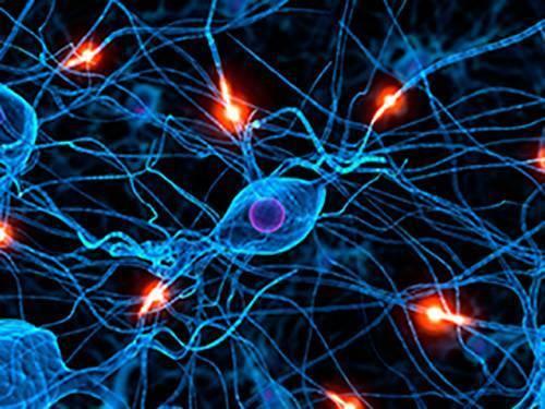 El cerebro continua trabajando mientras dormimos. las neuronas se activan en completa sincronía solamente en segundos para procesar la información que se ha recolectado durante el día.
